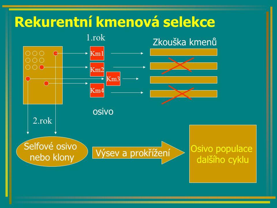 Rekurentní kmenová selekce Km1 Km2 Km3 Km4 osivo Selfové osivo nebo klony Výsev a prokřížení Osivo populace dalšího cyklu Zkouška kmenů 2.rok 1.rok