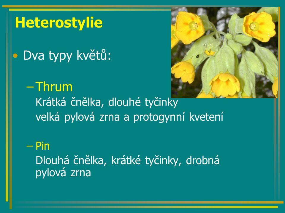 Heterostylie Dva typy květů: –Thrum Krátká čnělka, dlouhé tyčinky velká pylová zrna a protogynní kvetení –Pin Dlouhá čnělka, krátké tyčinky, drobná py