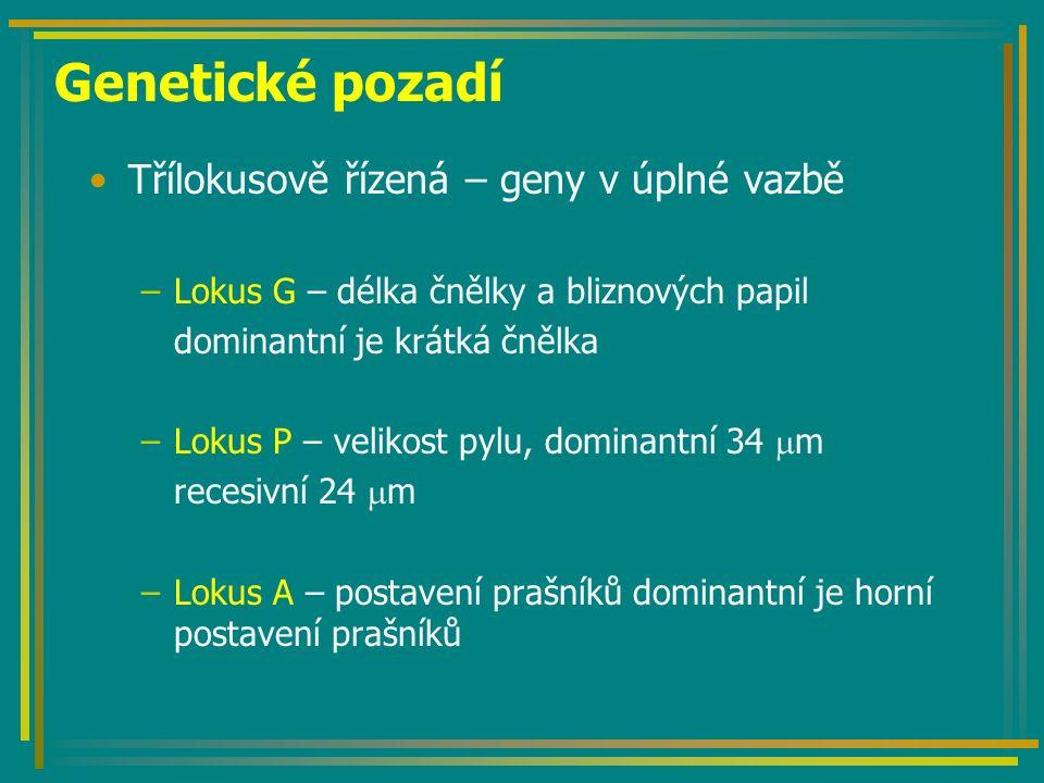 Genetické pozadí Třílokusově řízená – geny v úplné vazbě –Lokus G – délka čnělky a bliznových papil dominantní je krátká čnělka –Lokus P – velikost py