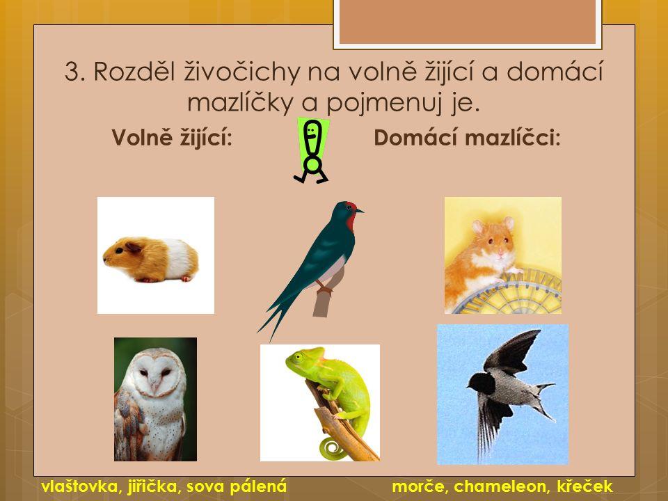 3. Rozděl živočichy na volně žijící a domácí mazlíčky a pojmenuj je. Volně žijící:Domácí mazlíčci: vlaštovka, jiřička, sova pálenámorče, chameleon, kř