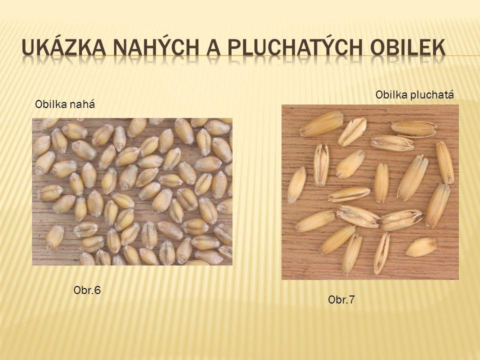  1.Uveďte příklady obilnin z 1. skupiny obilnin.