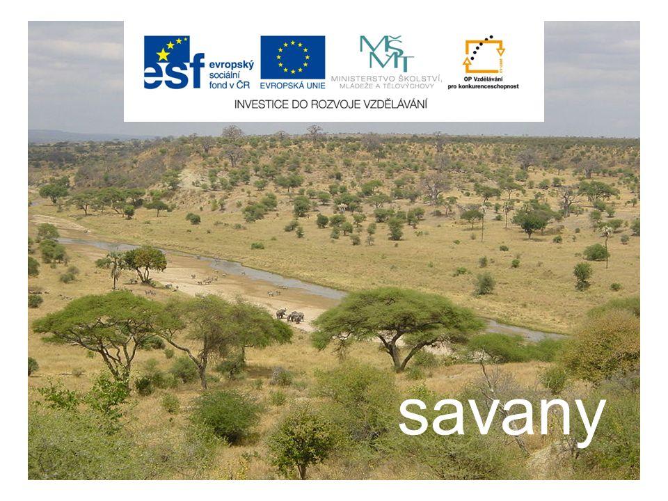 obsah  úvod  savany  fauna savan  flóra savan  zemědělské využití savan  kontrolní otázky