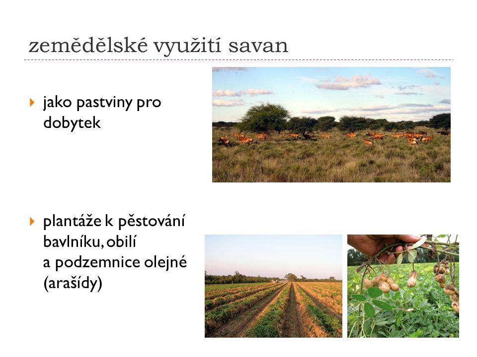 zemědělské využití savan  jako pastviny pro dobytek  plantáže k pěstování bavlníku, obilí a podzemnice olejné (arašídy)