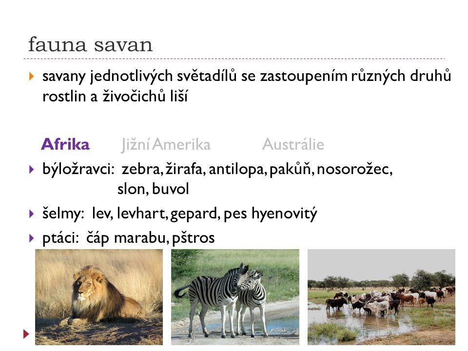 fauna savan  savany jednotlivých světadílů se zastoupením různých druhů rostlin a živočichů liší AfrikaJižní AmerikaAustrálie  býložravci: zebra, ži