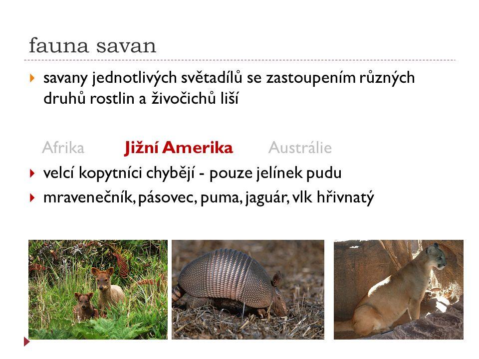 fauna savan  savany jednotlivých světadílů se zastoupením různých druhů rostlin a živočichů liší AfrikaJižní AmerikaAustrálie  klokan, koala, ptakopysk, pes dingo, emu hnědý