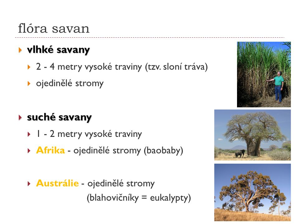 flóra savan  vlhké savany  2 - 4 metry vysoké traviny (tzv. sloní tráva)  ojedinělé stromy  suché savany  1 - 2 metry vysoké traviny  Afrika - o