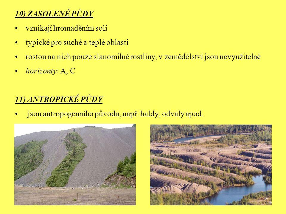 10) ZASOLENÉ PŮDY vznikají hromaděním solí typické pro suché a teplé oblasti rostou na nich pouze slanomilné rostliny, v zemědělství jsou nevyužitelné