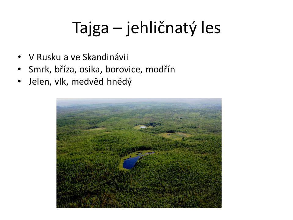 Tajga – jehličnatý les V Rusku a ve Skandinávii Smrk, bříza, osika, borovice, modřín Jelen, vlk, medvěd hnědý