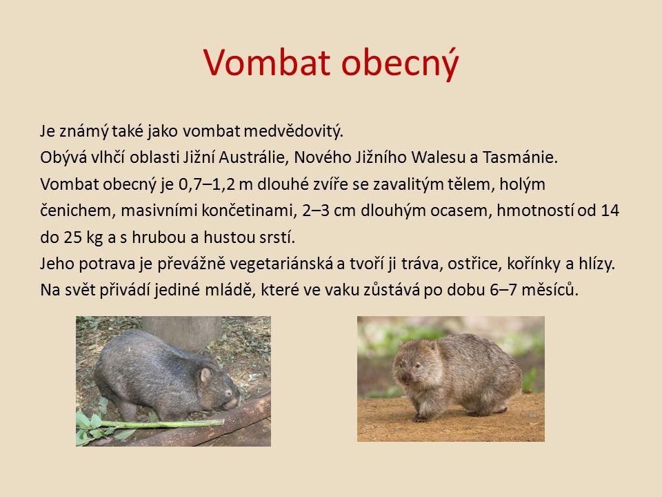 Vombat obecný Je známý také jako vombat medvědovitý.