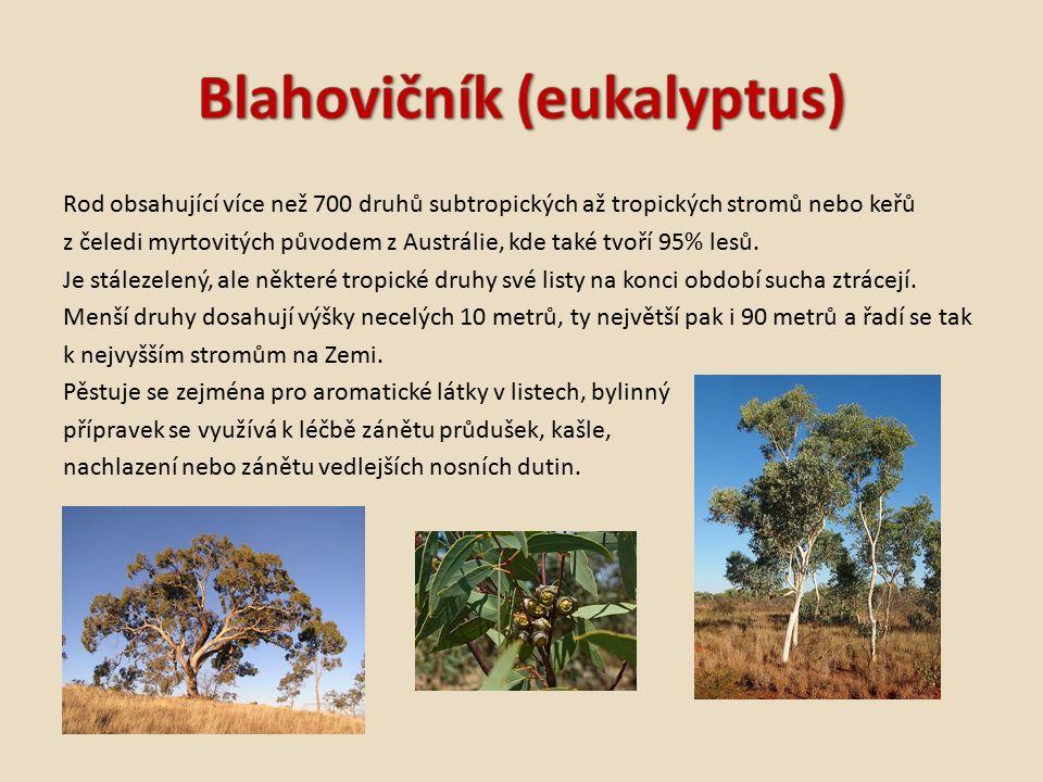 Rod obsahující více než 700 druhů subtropických až tropických stromů nebo keřů z čeledi myrtovitých původem z Austrálie, kde také tvoří 95% lesů.