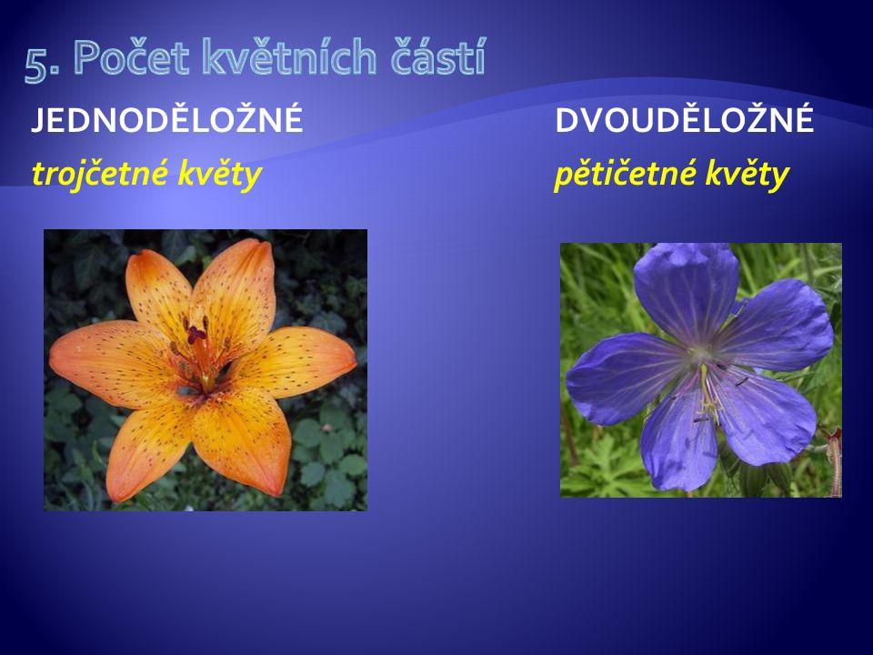 JEDNODĚLOŽNÉDVOUDĚLOŽNÉ trojčetné květypětičetné květy