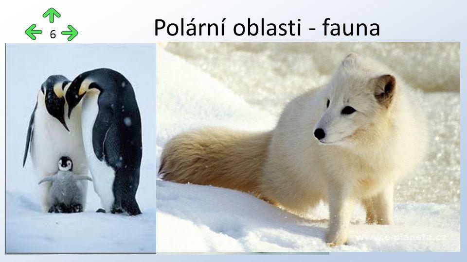 Polární oblasti - fauna 6
