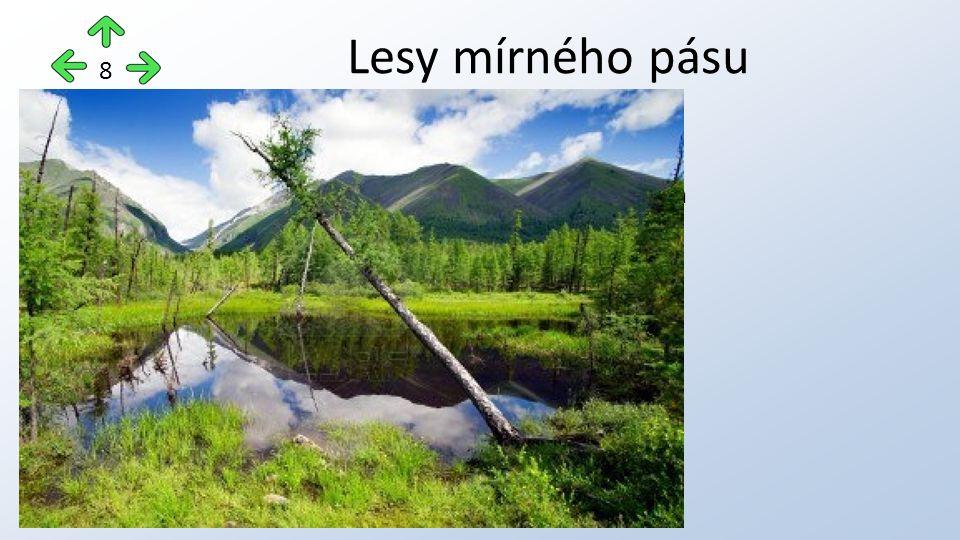 1)Jehličnaté lesy = Tajga chladné a vlhké léto, mrazivé zimy Hlavní dřeviny: smrk, borovice, bříza, modřín Lesy mírného pásu 8