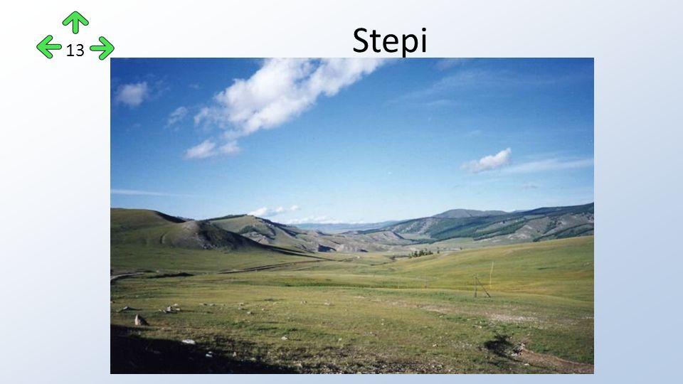 Stepi 13