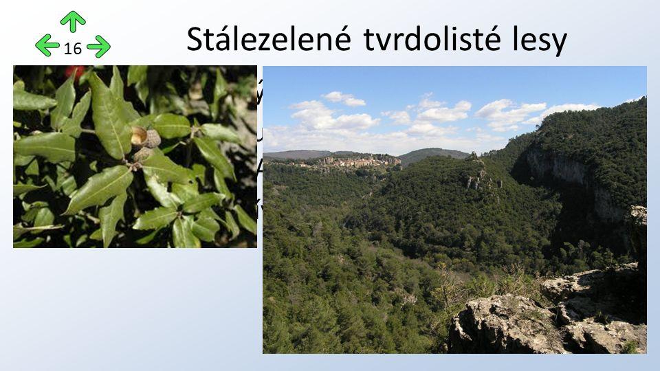 v subtropických oblastech, rostou zde duby, vavříny, olivovníky, datlovníky v Austrálii blahovičníky, půda je využívána pastevci a zemědělci.