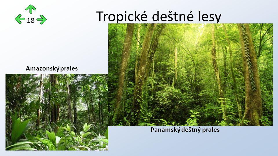Tropické deštné lesy 18 Panamský deštný prales Amazonský prales