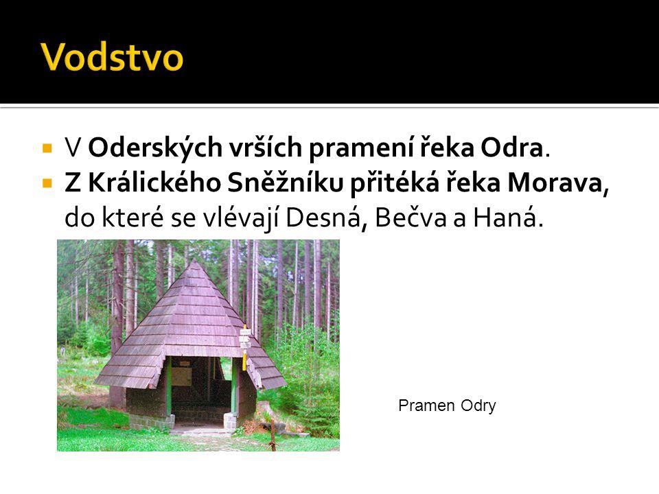  V Oderských vrších pramení řeka Odra.