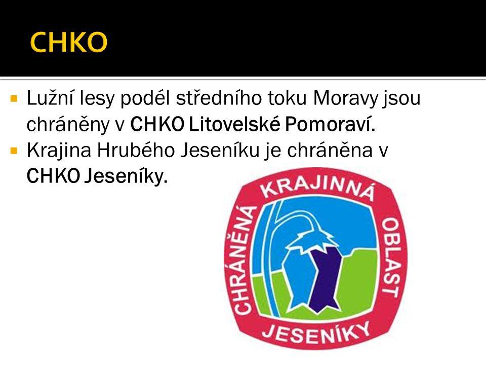  Lužní lesy podél středního toku Moravy jsou chráněny v CHKO Litovelské Pomoraví.