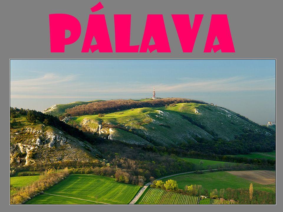 Pálava je skutečným přírodním klenotem České republiky, chráněnou krajinnou oblastí byla vyhlášena v roce 1976.