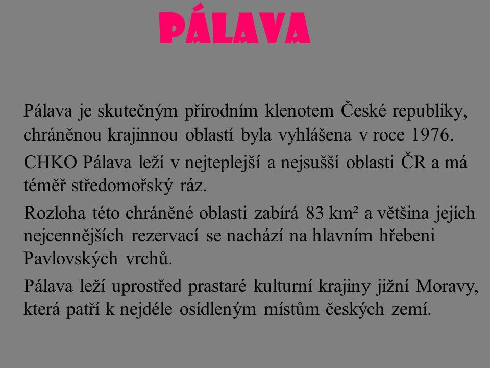 Pálava je skutečným přírodním klenotem České republiky, chráněnou krajinnou oblastí byla vyhlášena v roce 1976. CHKO Pálava leží v nejteplejší a nejsu