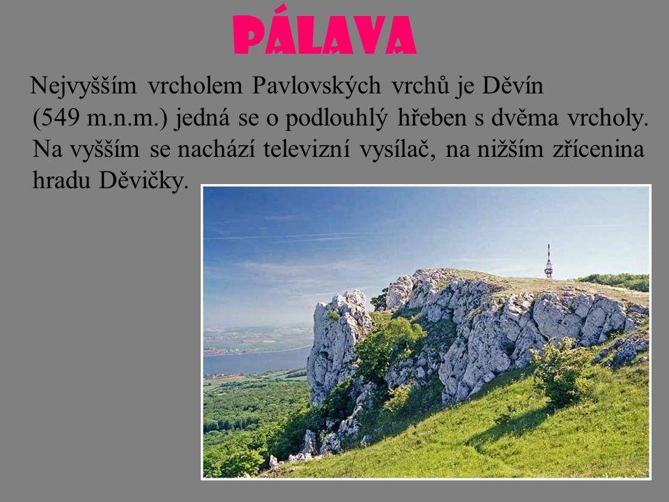 PÁLAVA Nejvyšším vrcholem Pavlovských vrchů je Děvín (549 m.n.m.) jedná se o podlouhlý hřeben s dvěma vrcholy. Na vyšším se nachází televizní vysílač,