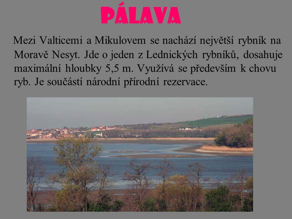 PÁLAVA Mezi Valticemi a Mikulovem se nachází největší rybník na Moravě Nesyt. Jde o jeden z Lednických rybníků, dosahuje maximální hloubky 5,5 m. Využ