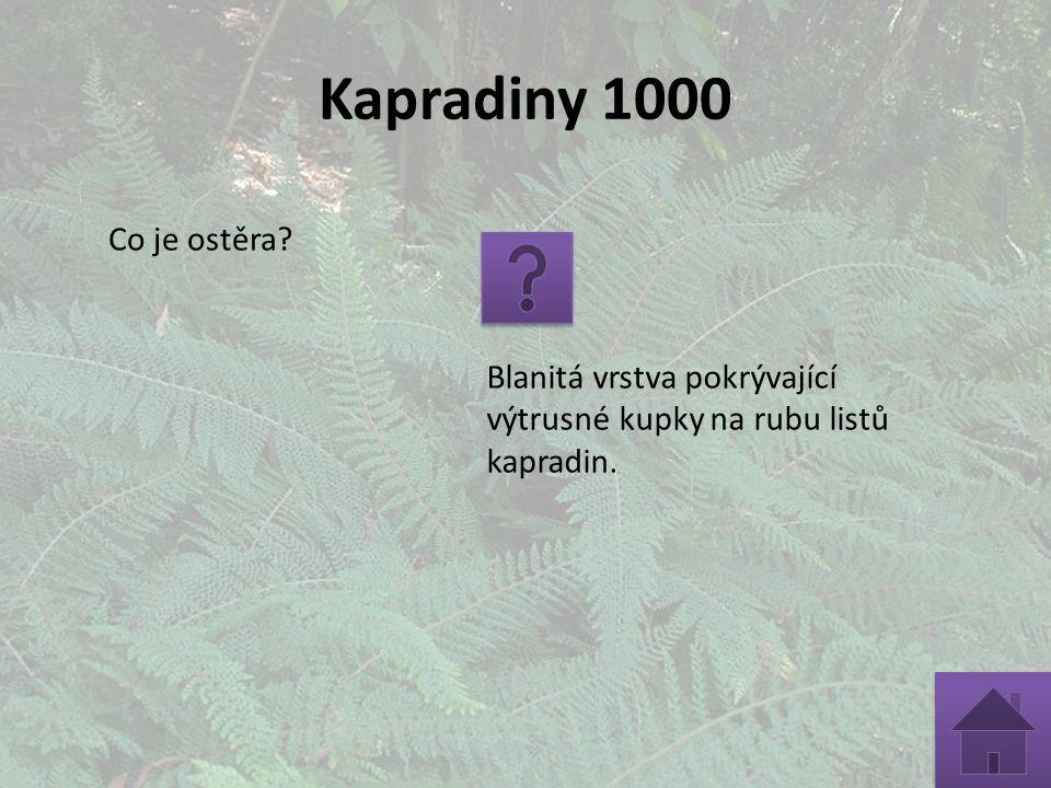 Kapradiny 1000 Co je ostěra? Blanitá vrstva pokrývající výtrusné kupky na rubu listů kapradin.