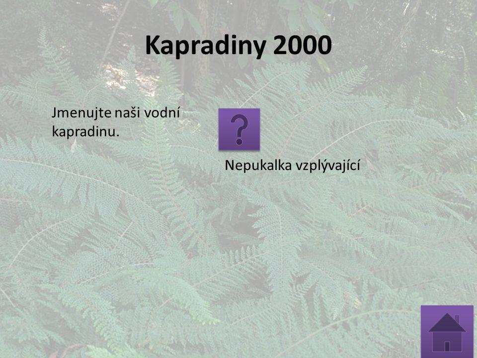 Kapradiny 2000 Jmenujte naši vodní kapradinu. Nepukalka vzplývající