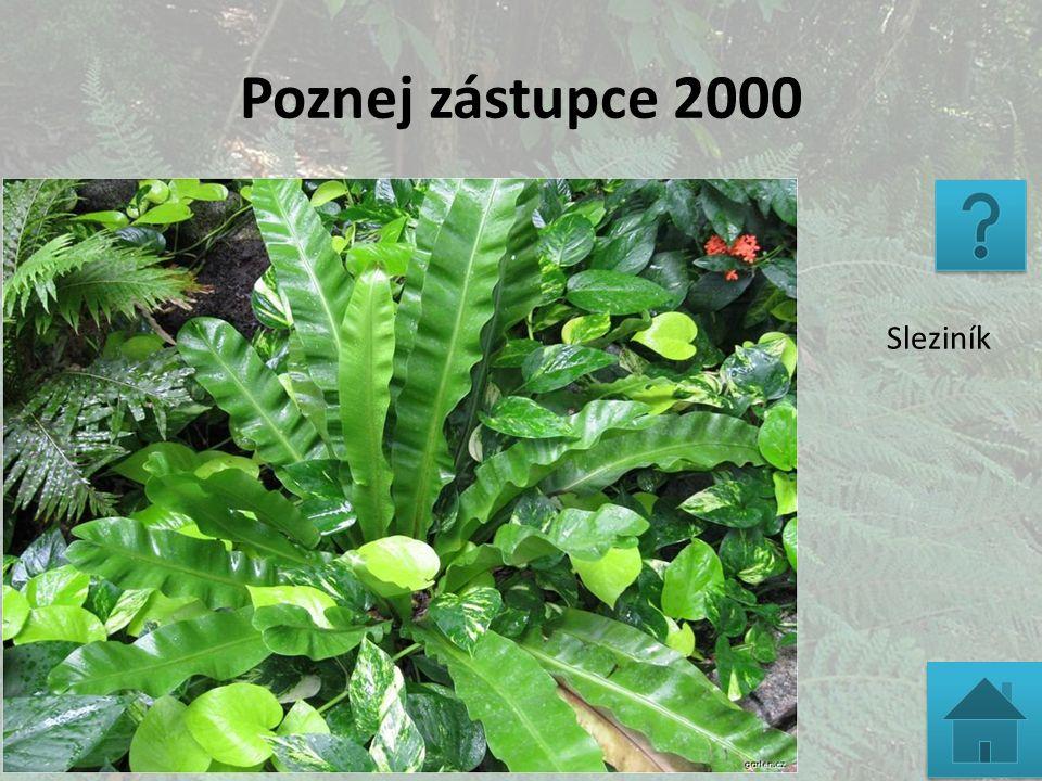 Poznej zástupce 2000 Sleziník