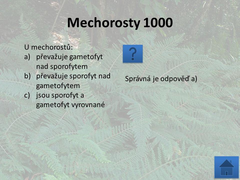 Mechorosty 1000 U mechorostů: a)převažuje gametofyt nad sporofytem b)převažuje sporofyt nad gametofytem c)jsou sporofyt a gametofyt vyrovnané Správná