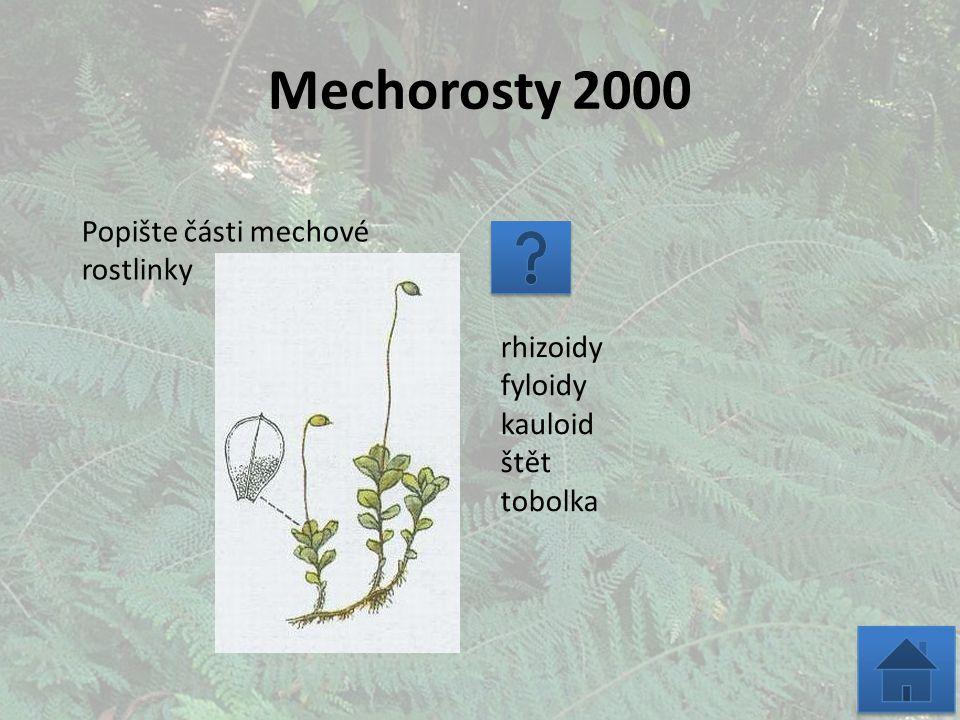 Mechorosty 2000 Popište části mechové rostlinky rhizoidy fyloidy kauloid štět tobolka