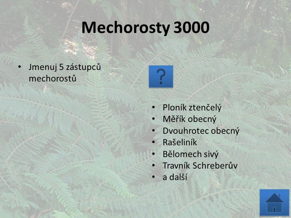 Mechorosty 3000 Jmenuj 5 zástupců mechorostů Ploník ztenčelý Měřík obecný Dvouhrotec obecný Rašeliník Bělomech sivý Travník Schreberův a další