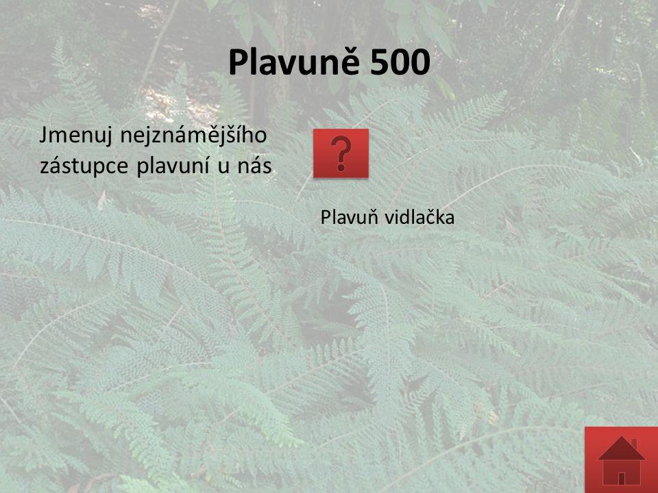 Kapradiny 3000 Jak se nazývají samčí a samičí pohlavní orgány kapradin.