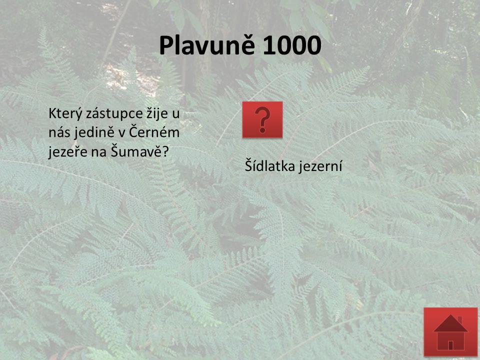 Plavuně 1000 Který zástupce žije u nás jedině v Černém jezeře na Šumavě? Šídlatka jezerní