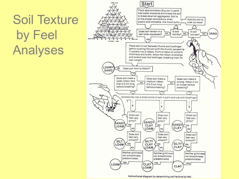 Soil Texture by Feel Analyses