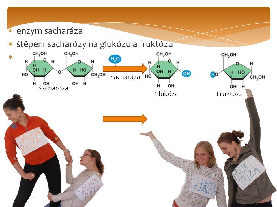  enzym sacharáza  štěpení sacharózy na glukózu a fruktózu  Sacharóza Sacharáza Glukóza Fruktóza