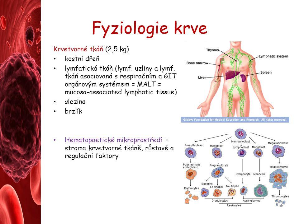 Fyziologie krve Krvetvorné tkáň (2,5 kg) kostní dřeň lymfatická tkáň (lymf.