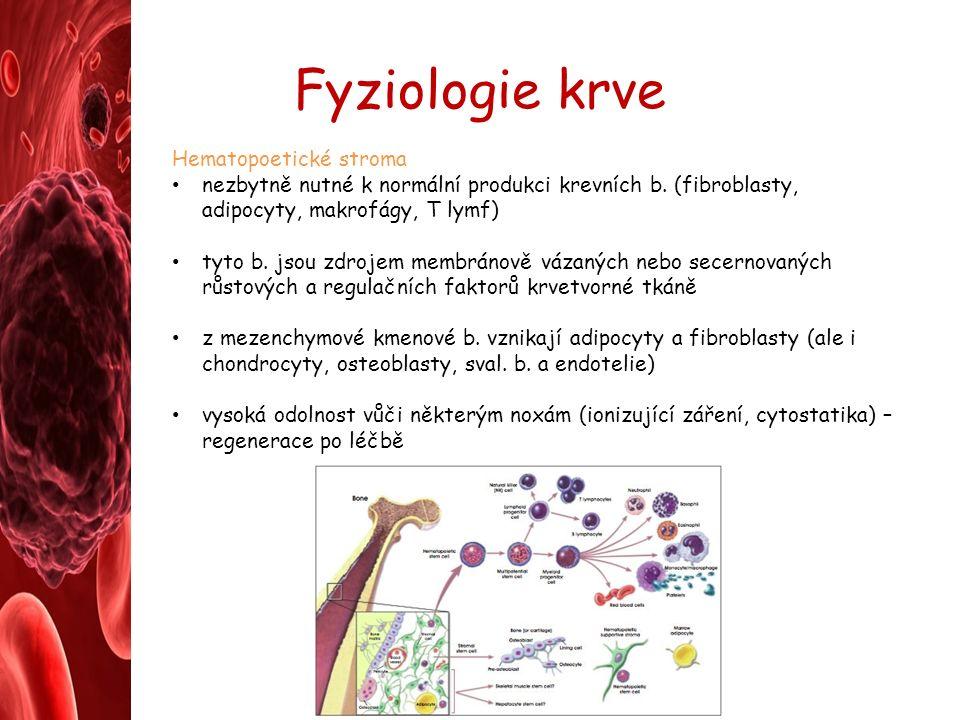 Fyziologie krve Hematopoetické stroma nezbytně nutné k normální produkci krevních b.