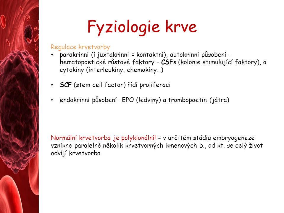 Fyziologie krve Regulace krvetvorby parakrinní (i juxtakrinní = kontaktní), autokrinní působení - hematopoetické růstové faktory – CSFs (kolonie stimulující faktory), a cytokiny (interleukiny, chemokiny…) SCF (stem cell factor) řídí proliferaci endokrinní působení –EPO (ledviny) a trombopoetin (játra) Normální krvetvorba je polyklonální.