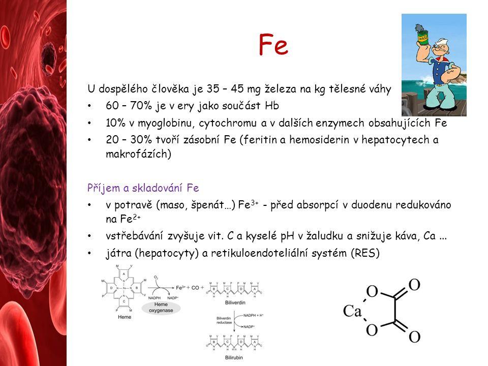 Fe U dospělého člověka je 35 – 45 mg železa na kg tělesné váhy 60 – 70% je v ery jako součást Hb 10% v myoglobinu, cytochromu a v dalších enzymech obsahujících Fe 20 – 30% tvoří zásobní Fe (feritin a hemosiderin v hepatocytech a makrofázích) Příjem a skladování Fe v potravě (maso, špenát…) Fe 3+ - před absorpcí v duodenu redukováno na Fe 2+ vstřebávání zvyšuje vit.