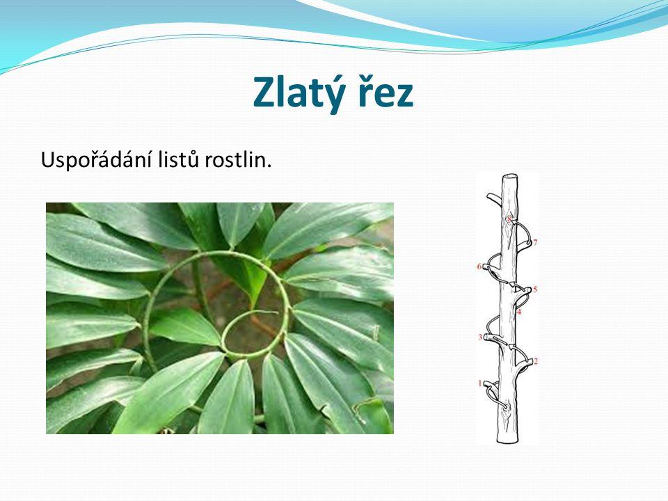 Zlatý řez Uspořádání listů rostlin.