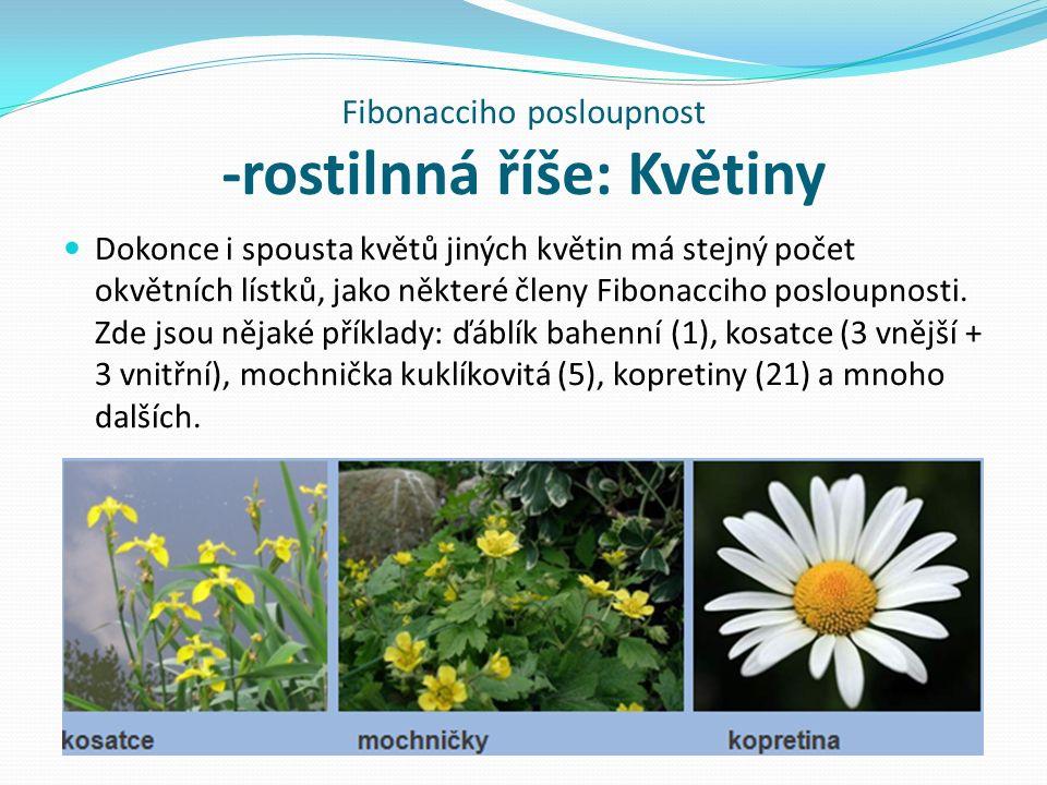 Fibonacciho posloupnost -rostilnná říše: Květiny Dokonce i spousta květů jiných květin má stejný počet okvětních lístků, jako některé členy Fibonacciho posloupnosti.