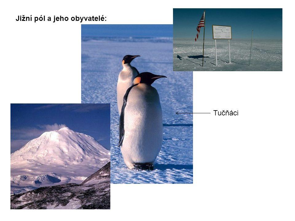 Jižní pól a jeho obyvatelé: Tučňáci