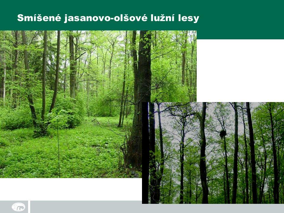 Smíšené jasanovo-olšové lužní lesy