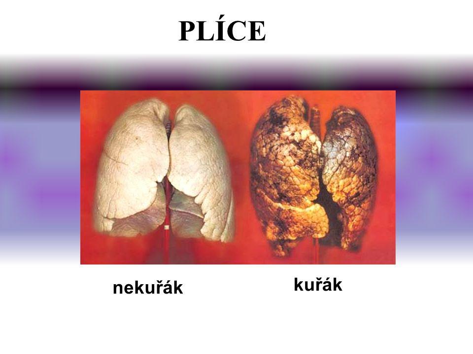 PLÍCE nekuřák kuřák