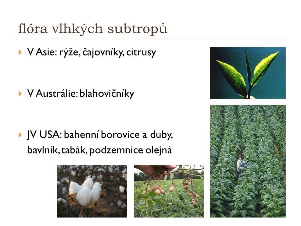 flóra vlhkých subtropů  V Asie: rýže, čajovníky, citrusy  V Austrálie: blahovičníky  JV USA: bahenní borovice a duby, bavlník, tabák, podzemnice olejná