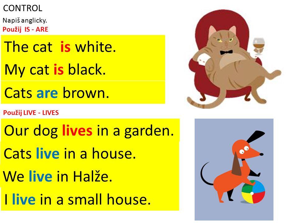 CONTROL Napiš anglicky. Použij IS - ARE Kočka je bílá. Moje kočka je černá. Kočky jsou hnědé. Použij LIVE - LIVES Náš pes bydlí na zahradě. Kočky bydl
