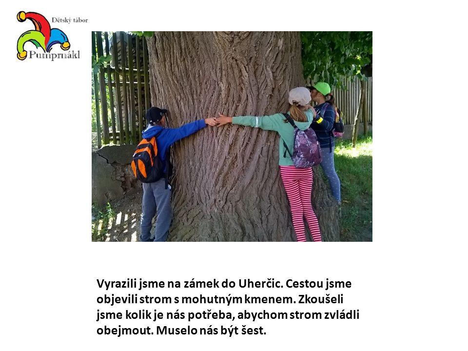 Vyrazili jsme na zámek do Uherčic. Cestou jsme objevili strom s mohutným kmenem.