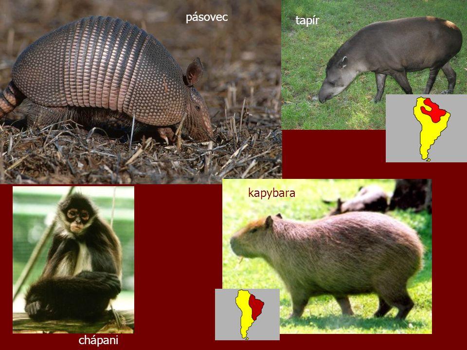 pásovec tapír chápani kapybara
