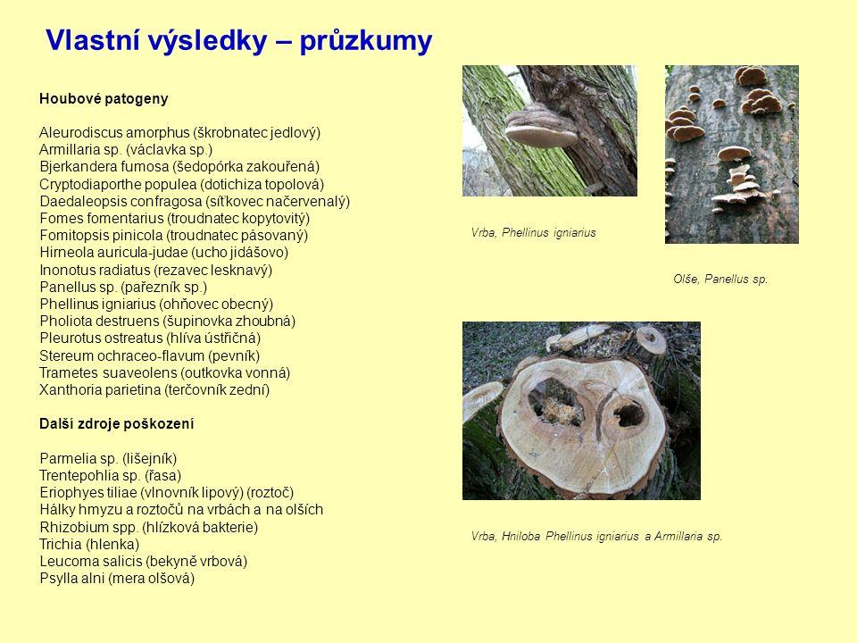 Vlastní výsledky – průzkumy Houbové patogeny Aleurodiscus amorphus (škrobnatec jedlový) Armillaria sp.